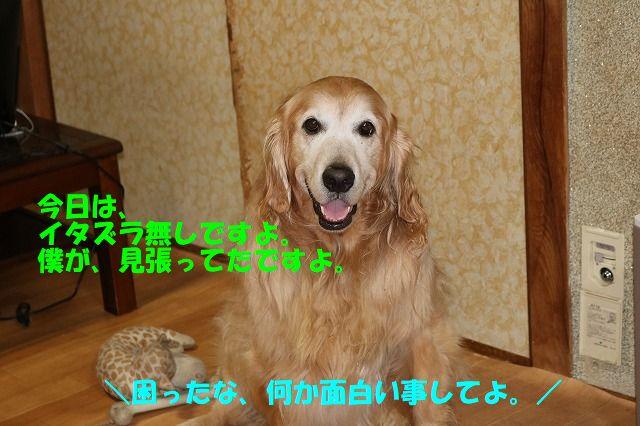 IMG_9476.jpg