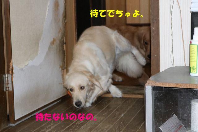 IMG_9561.jpg