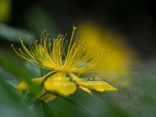 夏の花 A