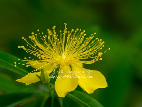 夏の花 B