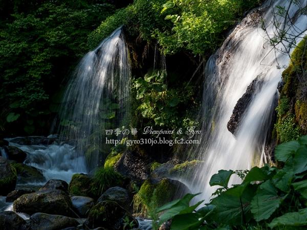 吐竜の滝 F