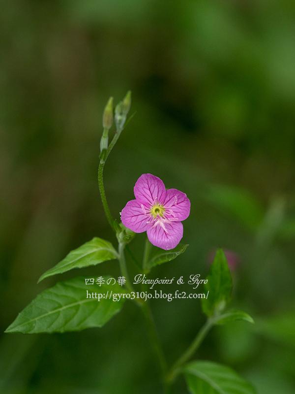 夏の花 E