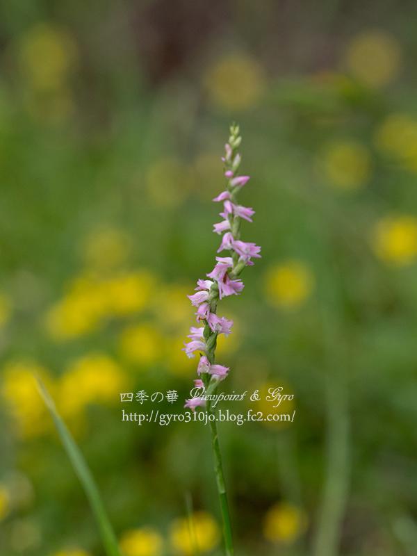 夏の花 C