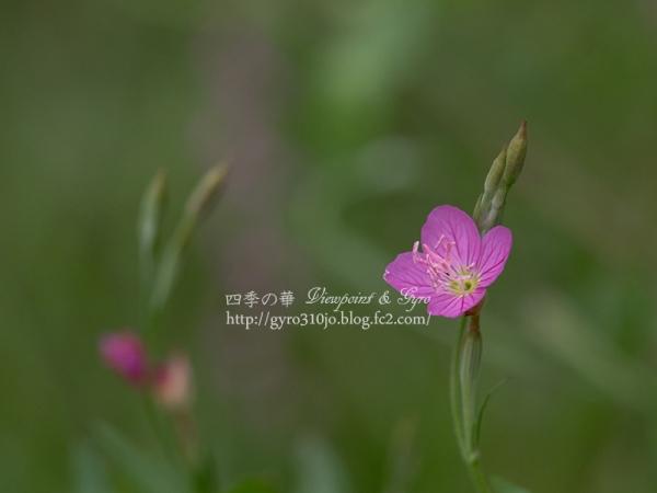 夏の花 D