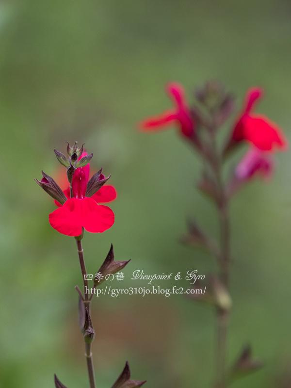 夏の花 G