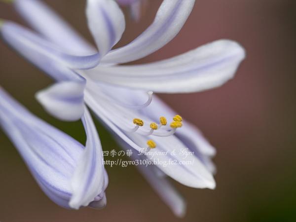 夏の花 I