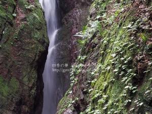 黒山三滝 D