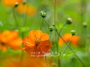 花の都公園 I