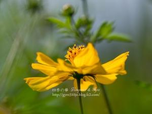 花の都公園 H