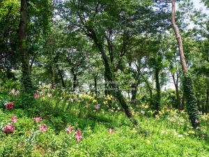 所沢ゆり園 I