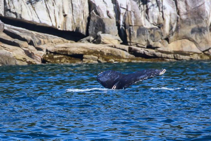 コクジラ2