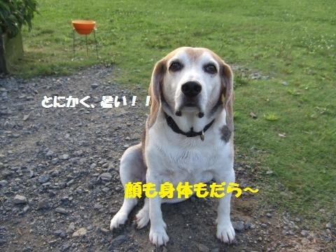 009_convert_20170716082420.jpg