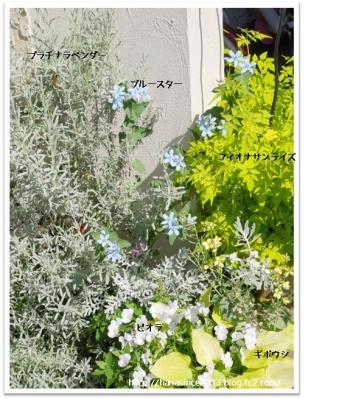 門柱前のお気に入り植物