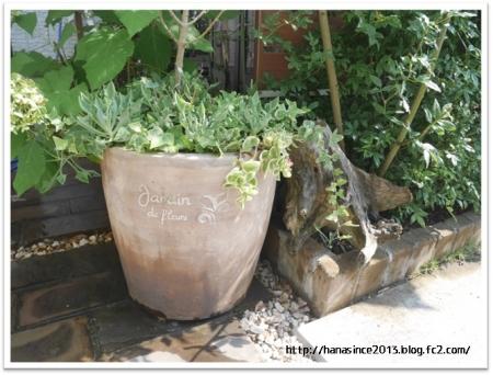 カインズの植木鉢