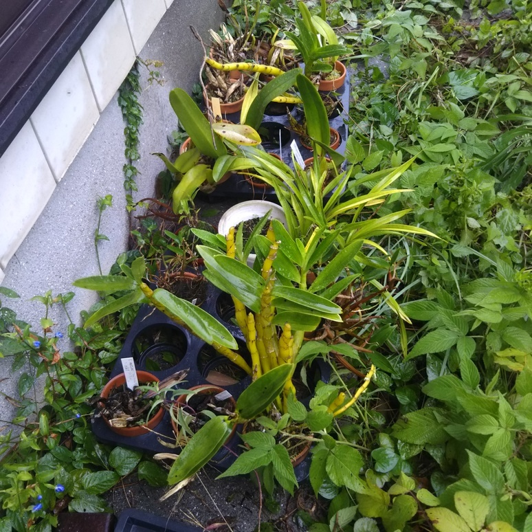 Plant 20170917