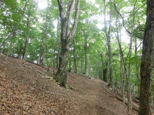 森林コース