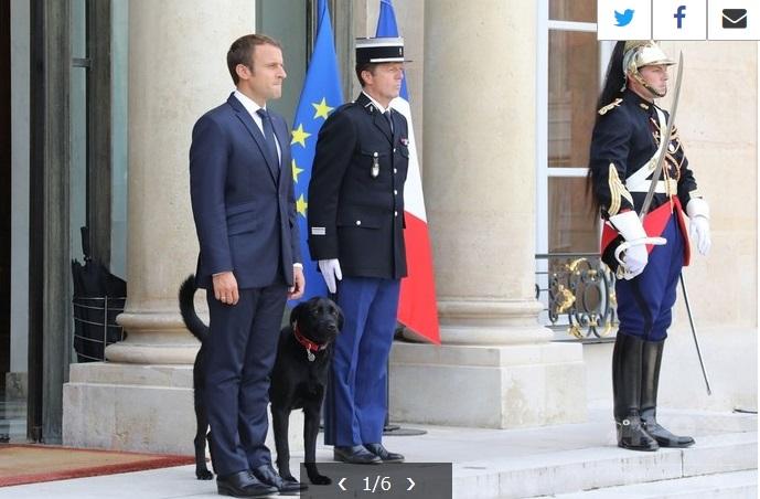 france_firstdog.jpg