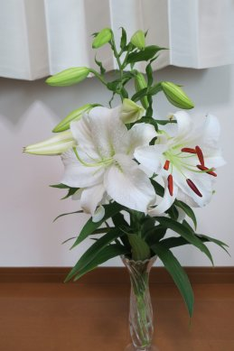 取り込んだ花が次々と咲く