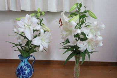 百合12花
