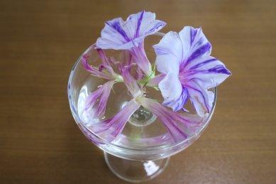采咲と親木・丸咲きの花