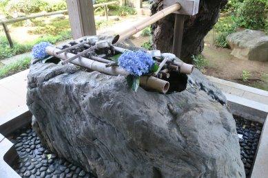 妙楽寺・手水のアジサイ