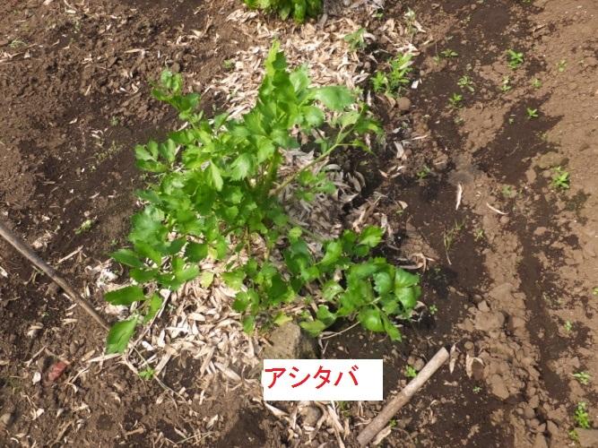 DSCF0583_1.jpg