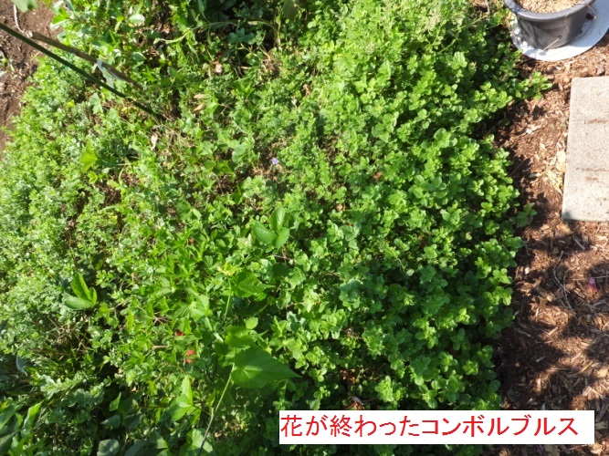 DSCF0648_1.jpg