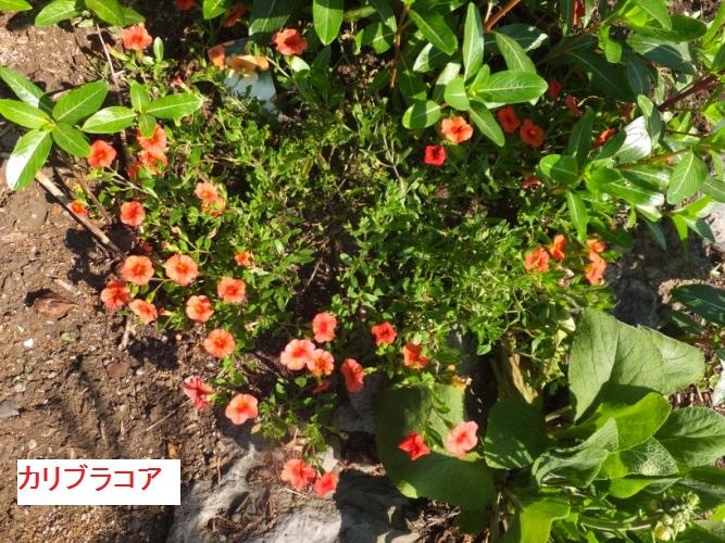 DSCF0680_1.jpg