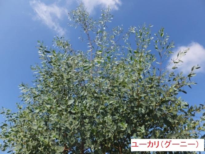 DSCF0688_1.jpg