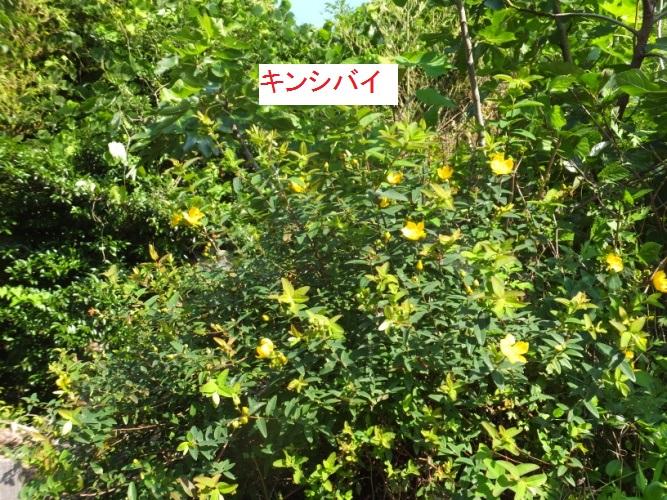 DSCF0700_1.jpg