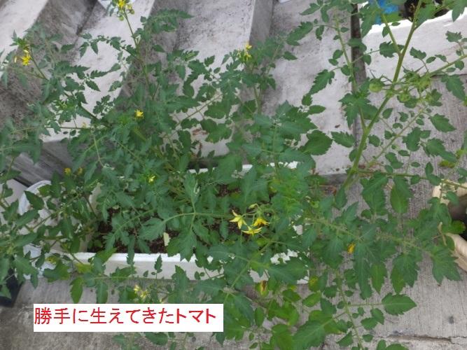 DSCF0909_1.jpg