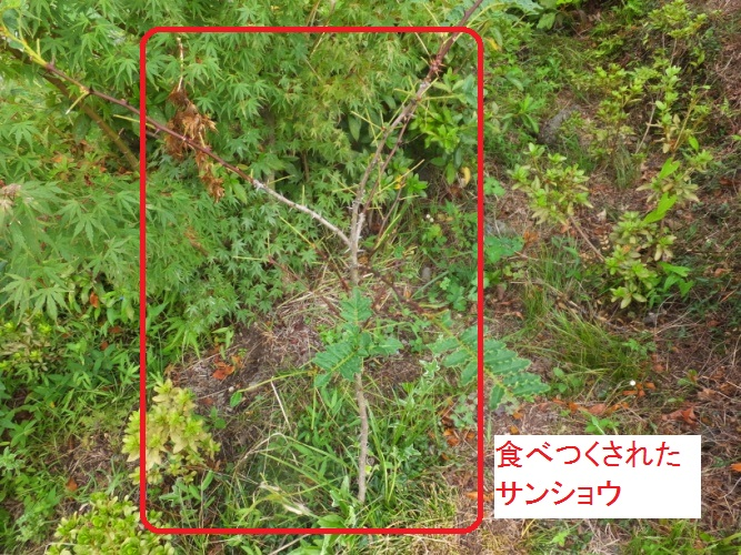 DSCF0914_1_20170726091102bc9.jpg
