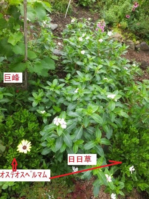 DSCF0985_1.jpg