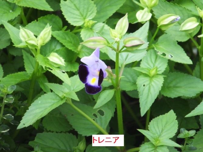 DSCF0986_1.jpg