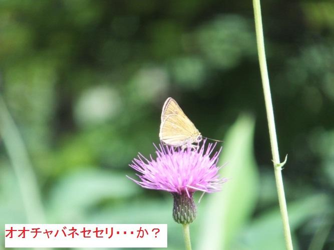 DSCF1136_1.jpg