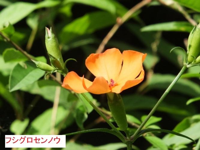 DSCF1140_1.jpg