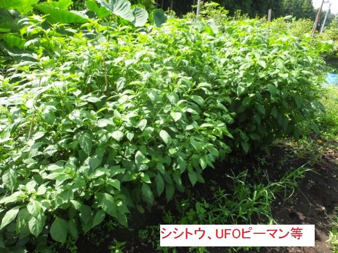 DSCF1292_1.jpg