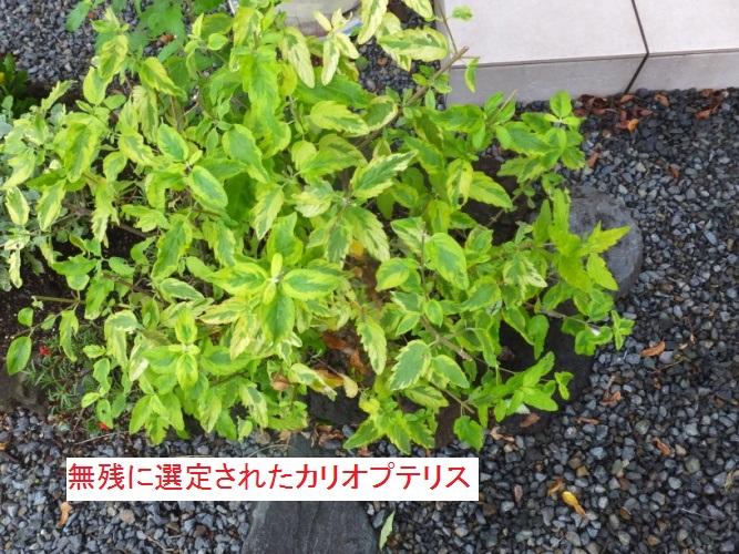 DSCF1386_1.jpg