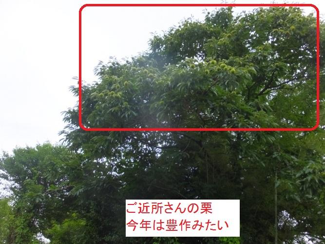 DSCF1600_1_201708141552420d6.jpg
