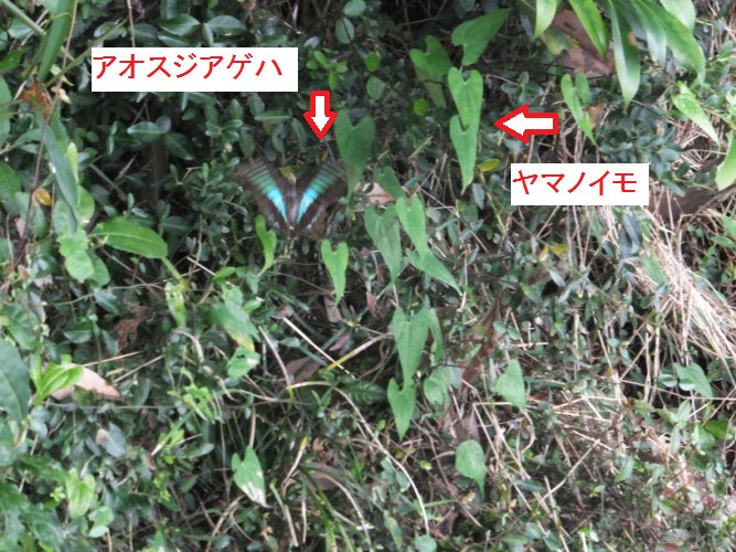 DSCF1611_1_20170814155320a64.jpg