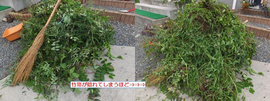 DSCF1766_2.jpg