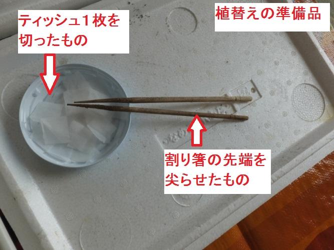DSCF1790_1.jpg
