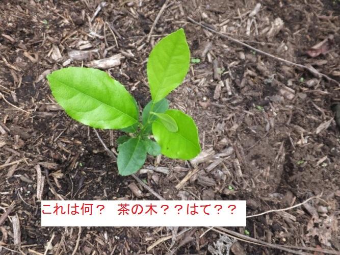 DSCF1860_1.jpg