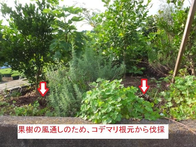 DSCF2024_1.jpg
