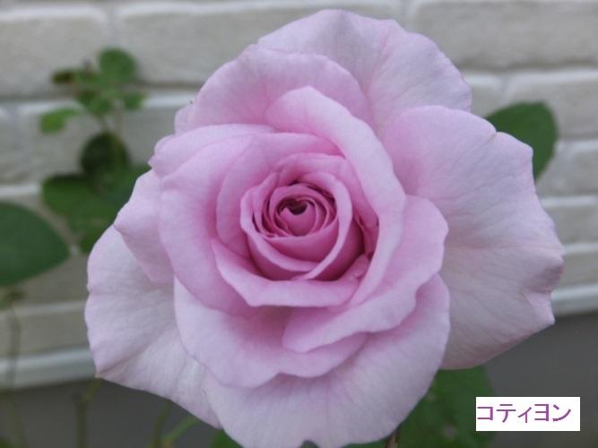 DSCF2094_1.jpg