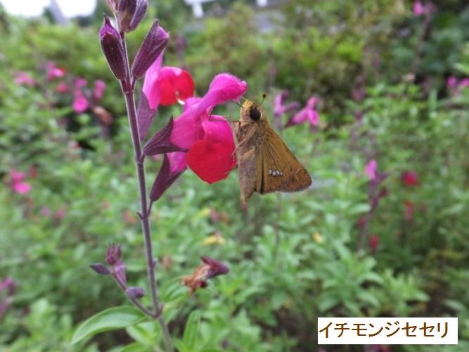 DSCF2106_1.jpg