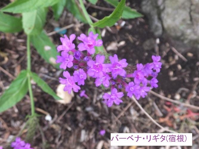 DSCF2113_1.jpg