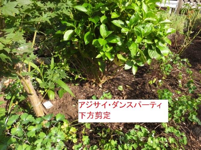 DSCF2219_1.jpg