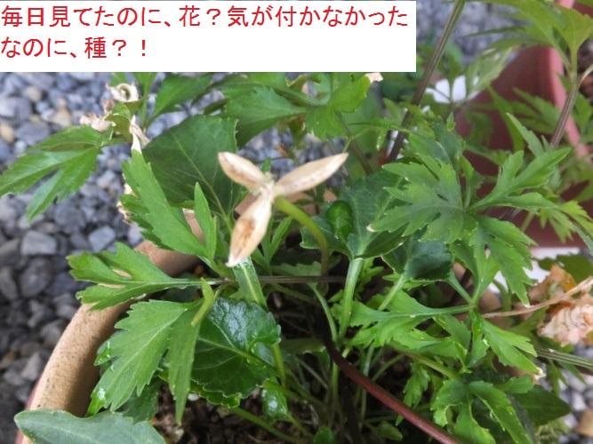 DSCF2259_1.jpg