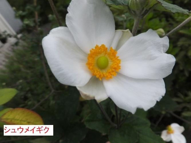 DSCF2625_1.jpg